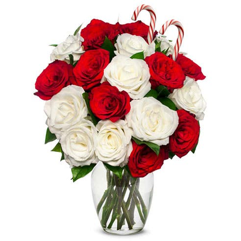 One and a Half Dozen Candy Cane Roses