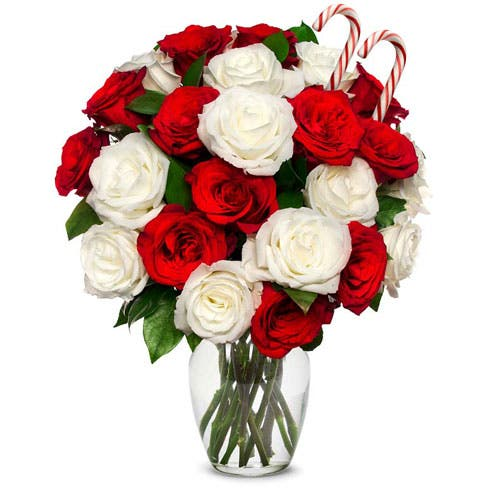 Two Dozen Candy Cane Roses