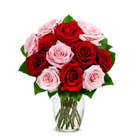 One Dozen Red & Pink Roses