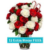 Candy Cane Roses - Two Dozen