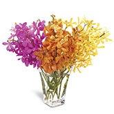 Vibrant Mokara Orchid Arrangement