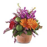 Luxury Gerbera Daisy Bouquet