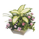 Peaceful Wishes Planter