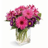 Hot Pink Daisy Bouquet