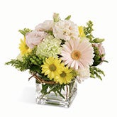 Dreamy Sophistication Daisies Bouquet