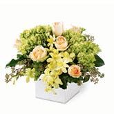 Luminous Charm Orchid Bouquet