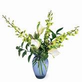 Stunning Simplicity Green Orchid Arrangement