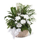 White Blossoms Sympathy Basket