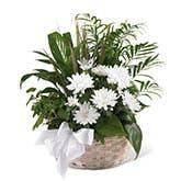 White Blossoms Sympathy Basket