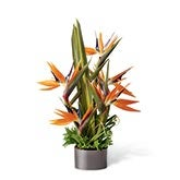 Birds of Paradise Modern Arrangement