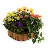 Gentle Solace Plant Basket