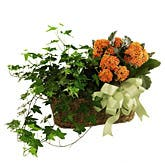 Kalanchoe & Ivy Planter