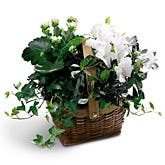 Sweet Serenity Plants Basket