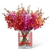 Vibrant Orchid Garden