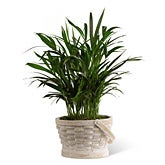 Loving Grace Palm Planter