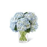 Elegant Blue Hydrangeas