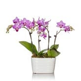 Pink Mini Orchid Planter