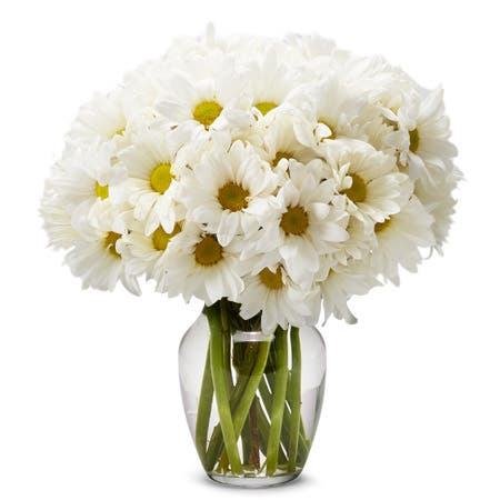Small White Daisy Bouquet