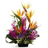 Exotic Bird of Paradise Arrangement