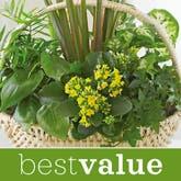 Discount Plant - Florist Designed