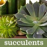 Discount Succulent Plant Garden - Florist Designed