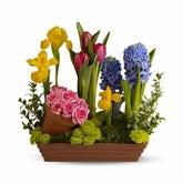 Spring Favorites Garden