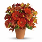 Golden Glow Orange Daisy Bouquet