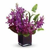 Island Princess Mokara Orchids